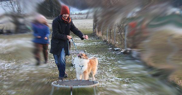 Innere Glaubenssätze - kein Hundemensch
